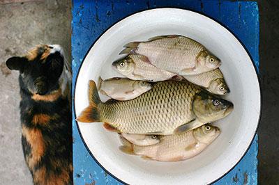 Alimentation du chat :  bien nourrir son félin de compagnie