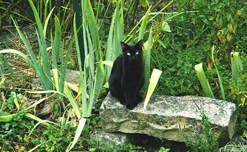 Le chat est le mammifère de compagnie le plus répandu dans les foyers français