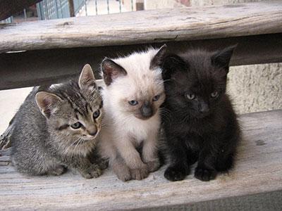 quel chat adopter les crit res prendre en compte pour. Black Bedroom Furniture Sets. Home Design Ideas