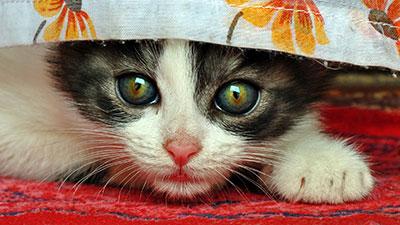 Importance de la caccination du chat